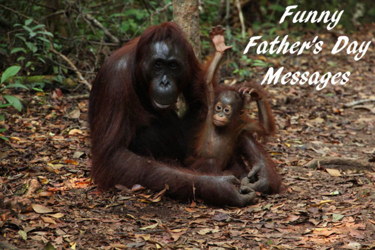 Funny Father's Day Sayings Orangutans