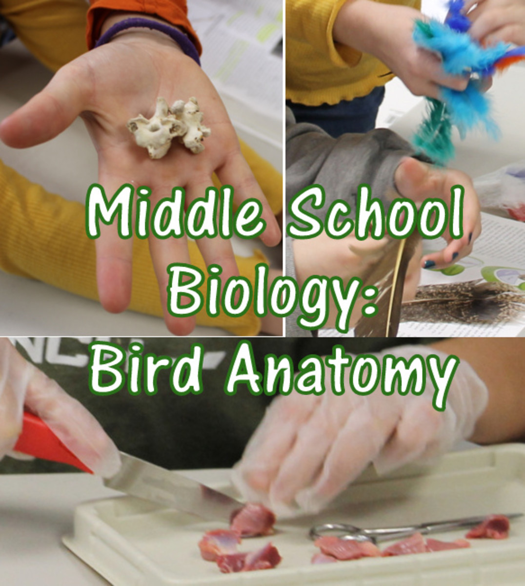 Bird Anatomy Lesson: A Middle School Biology Lesson