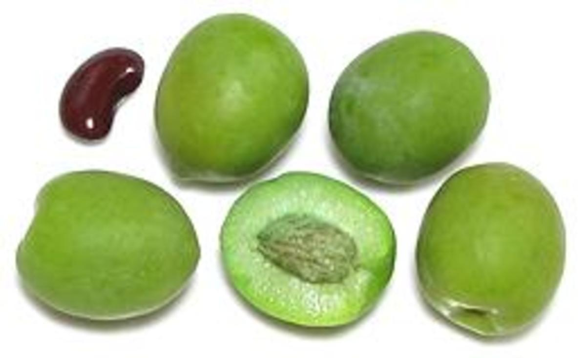 A kidney bean used as a gauge for size of this beautiful castelvetrano olive. These buttery crunch olives are known to make even the biggest olive haters believers.