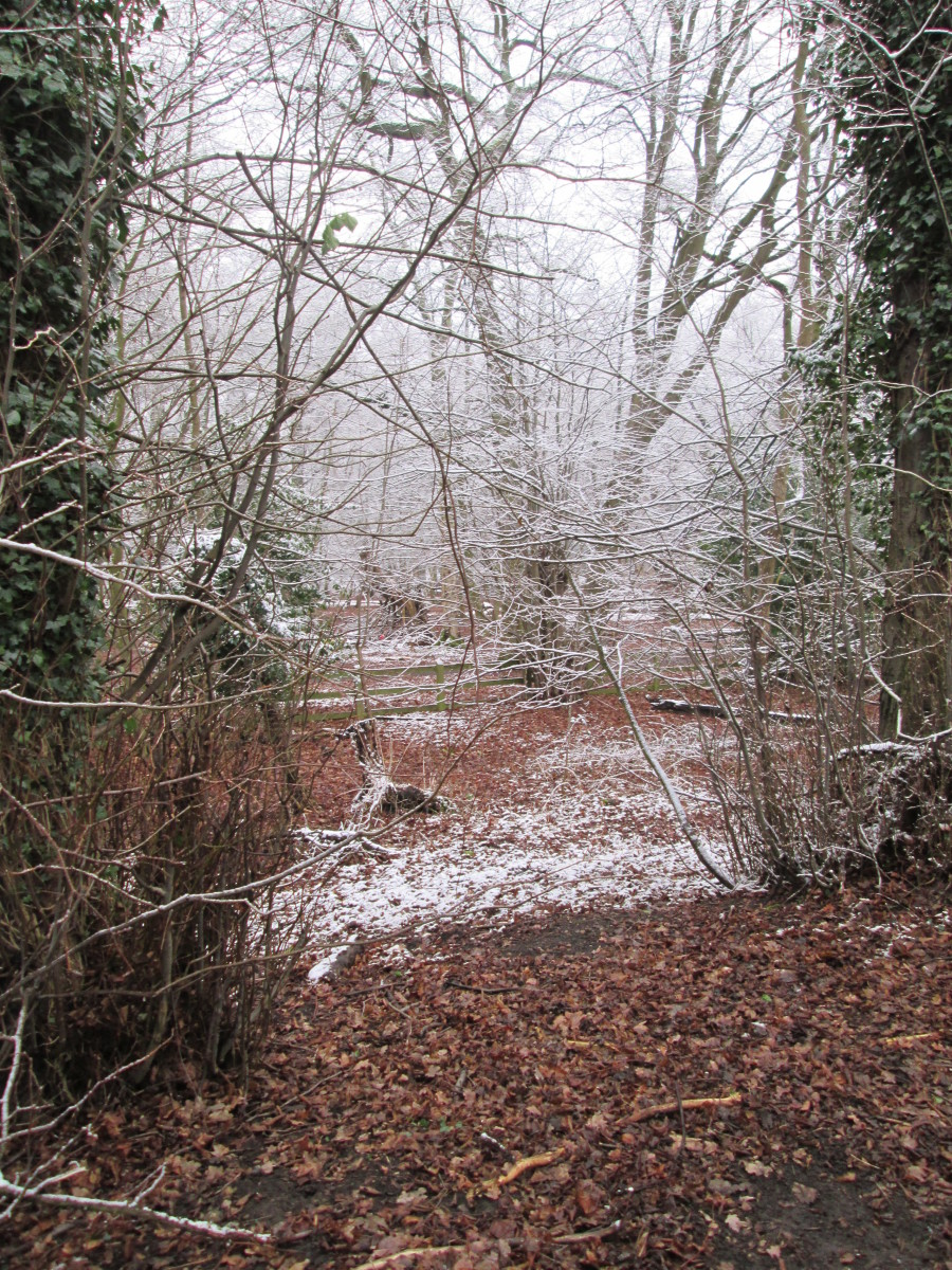 Frosted trees and fallen leaves make for a pleasant Christmas greetings card. Taken on a bracing winter's walk