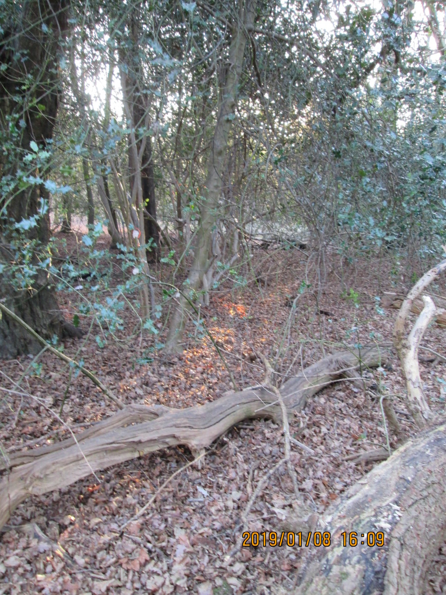 A lot of the flora - particularly elderly trees - has fallen victim to the passage of time. In some parts of the forest the undergrowth has overcome the taller denizens