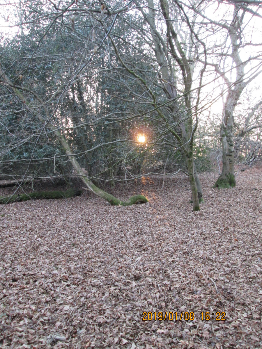 Not far from the 'Original Tea Hut' just off Cross Road (that leads to Fairmead Road), the sun bravely hangs on to shine through thicker growth - a last gasp before succumbing to dusk...