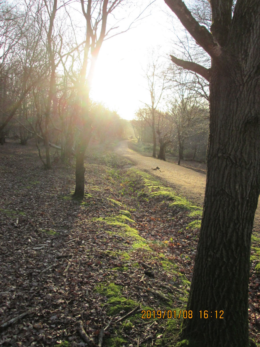 These two images show the bridle path as it snakes westward from Fairmead Road.