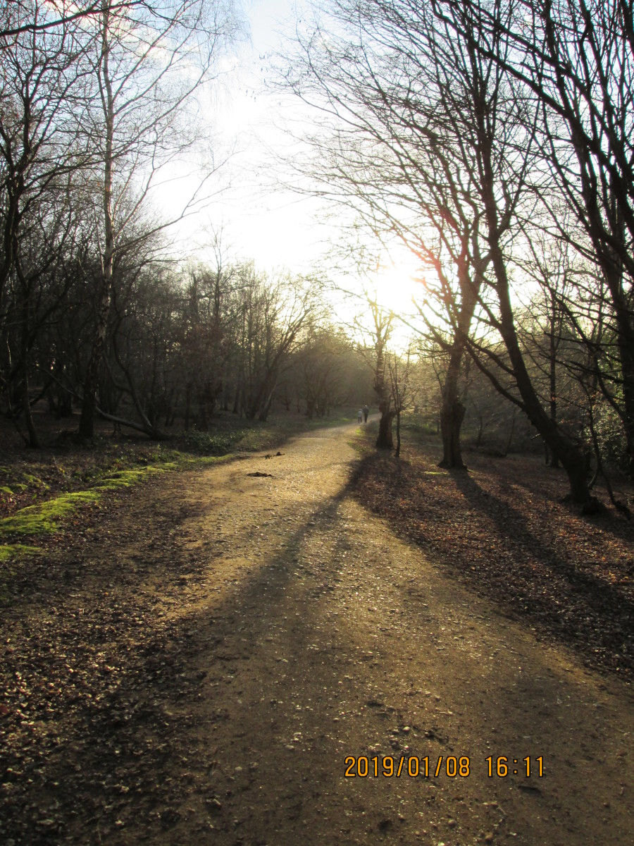 Winding bridle-paths abound in the forest. In most places they're passable  on foot and they're used by cyclists... Today I saw three youths on mono-wheels use them across Fairmead Road between two sections of the same bridle path