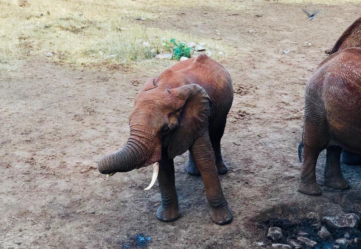 Baby Elephant (Elephant Orphanage)