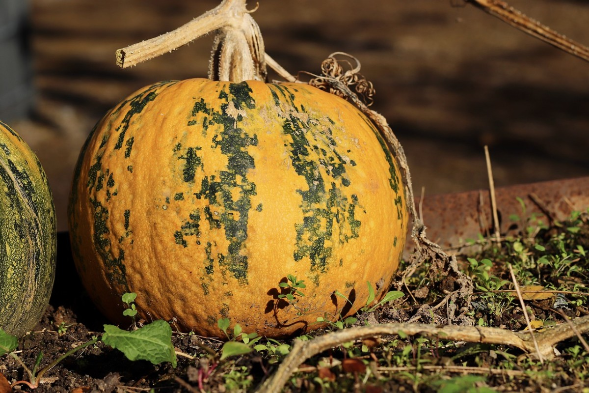 Pumpkin, Image by Annette Meyer from Pixabay