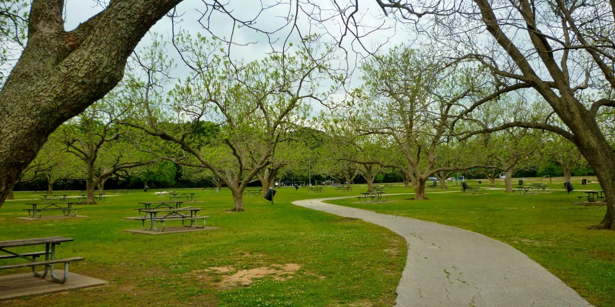 Picnic areas in a pecan grove in Cullen Park