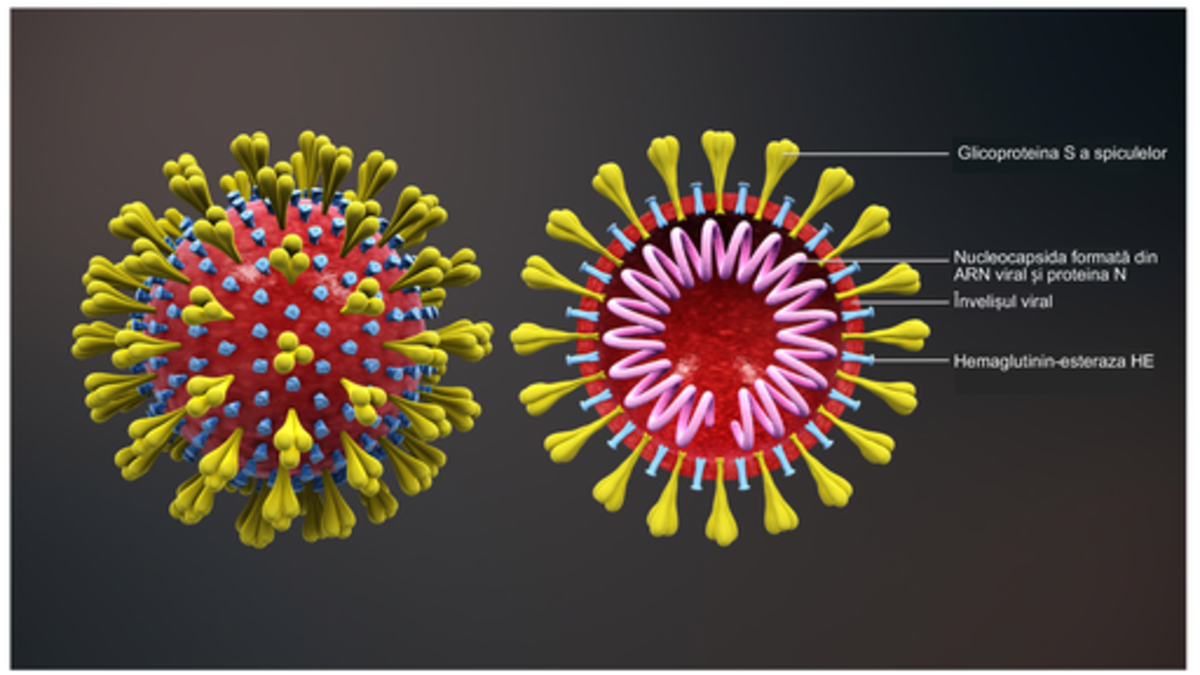Study of a virus - as we know, coronavirus (covid-19) is spreading rapidly