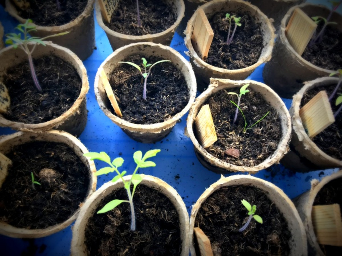 If you don't have a garden you could grow some seeds to pot up later.