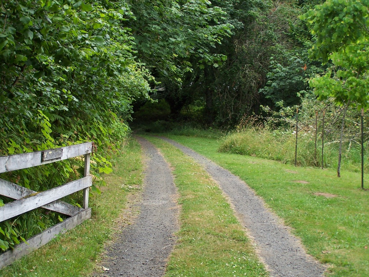 Choose a path of writing which moves YOU!
