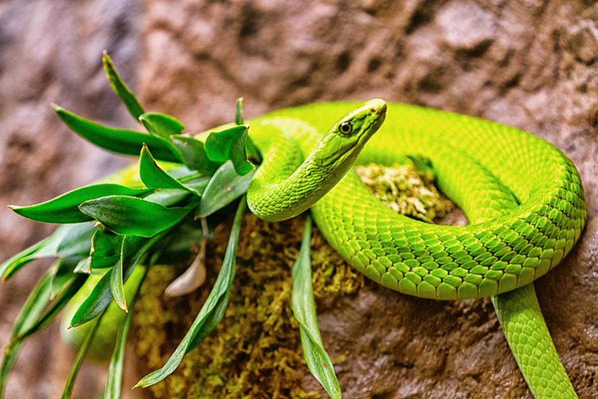 Snakebites Worldwide and Antivenin Plants for Snakebite Treatment