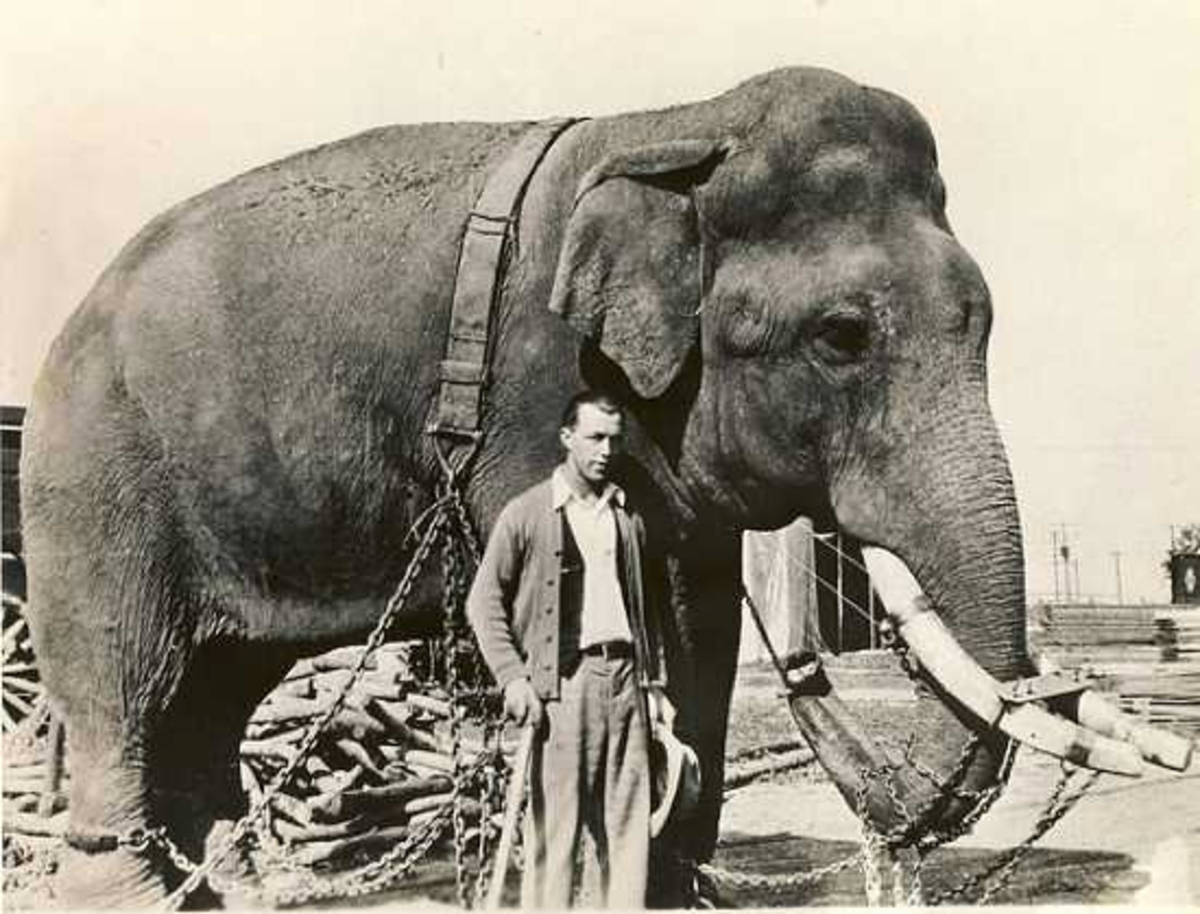 1870, Fateful Day When French Ate Elephant Meat