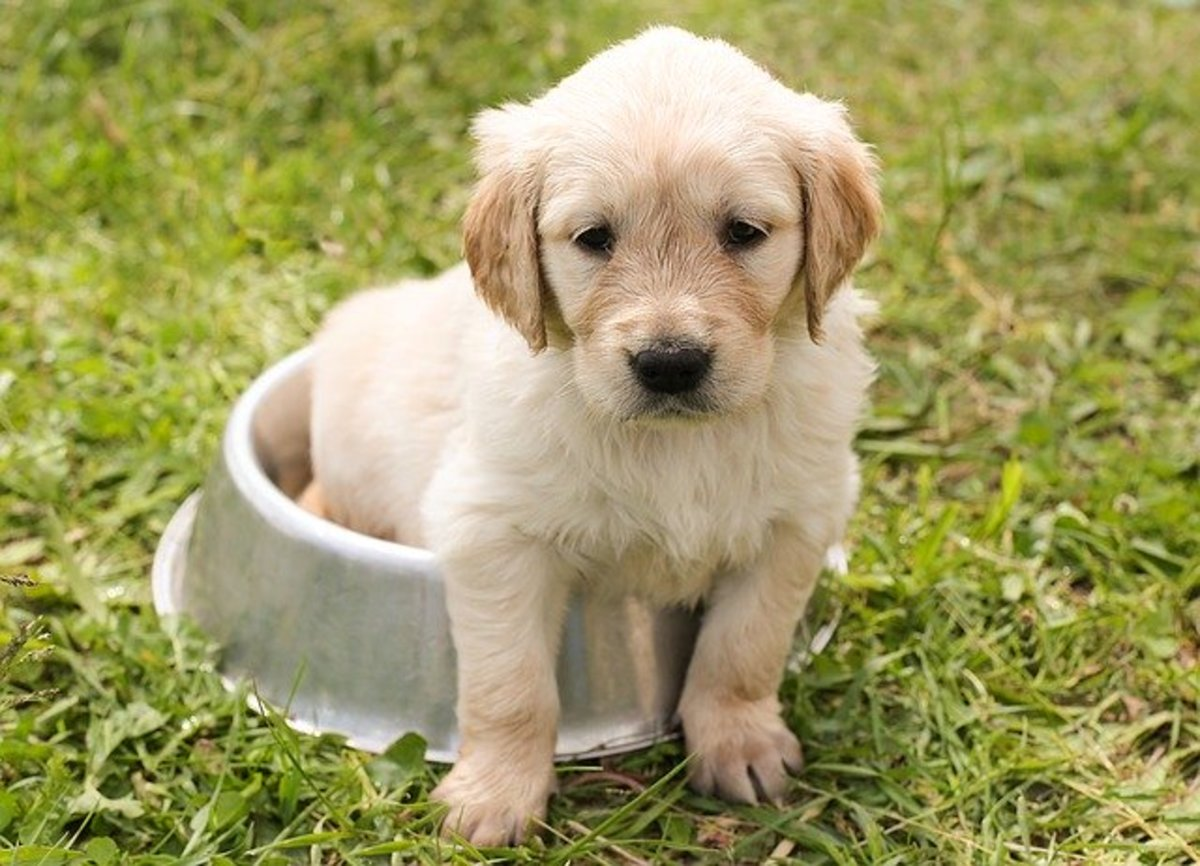 caring-for-and-training-a-puppy