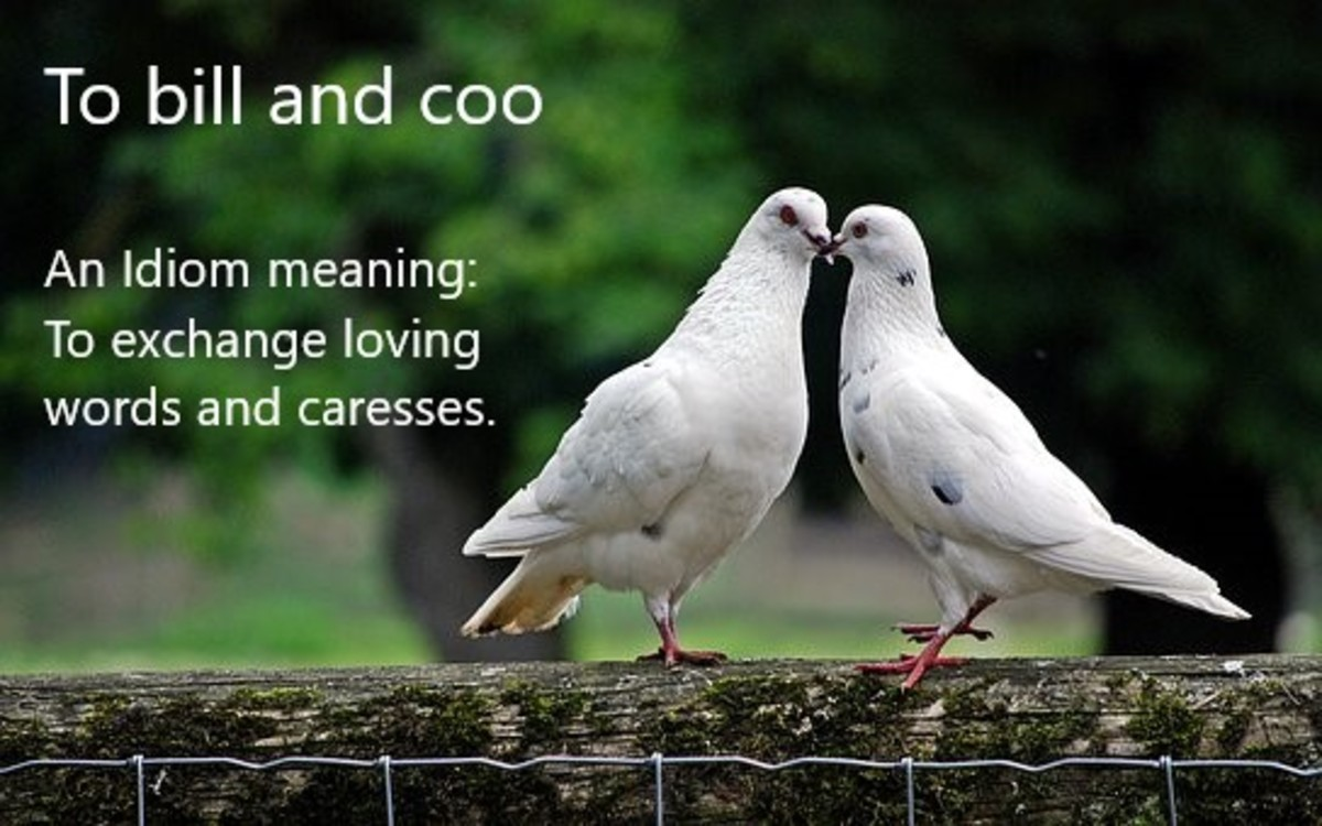 100-everyday-avian-idioms-and-phrases-inspired-by-human-observation-of-birds