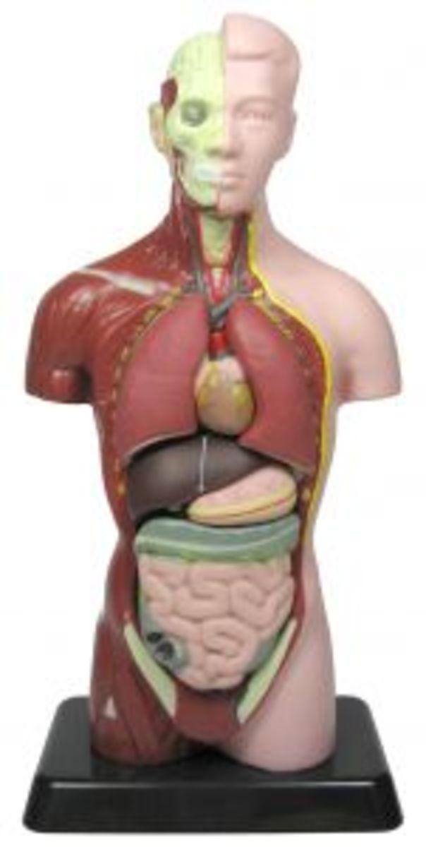 Las Vegas Human Organ Harvesting
