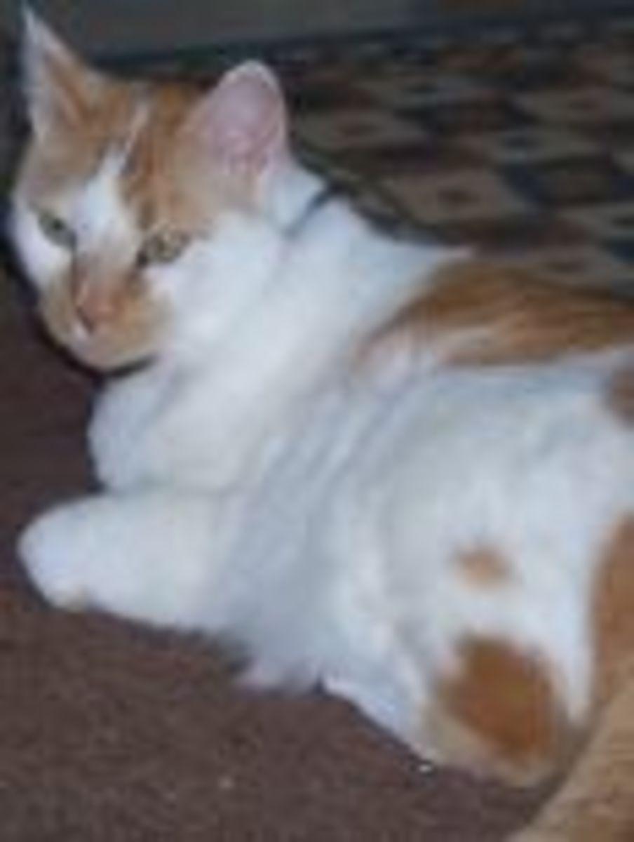 Healing My Cat with Qigong