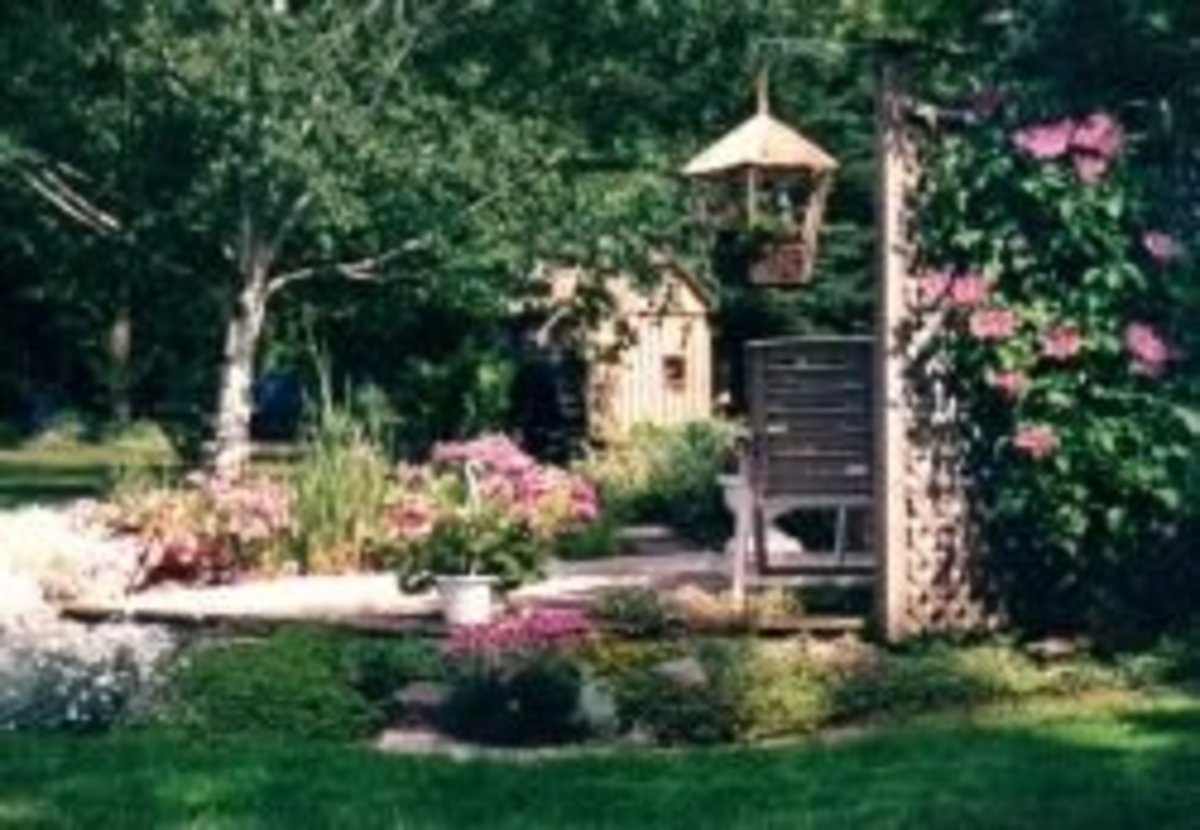 Dad's waterwheel and landscape with pond