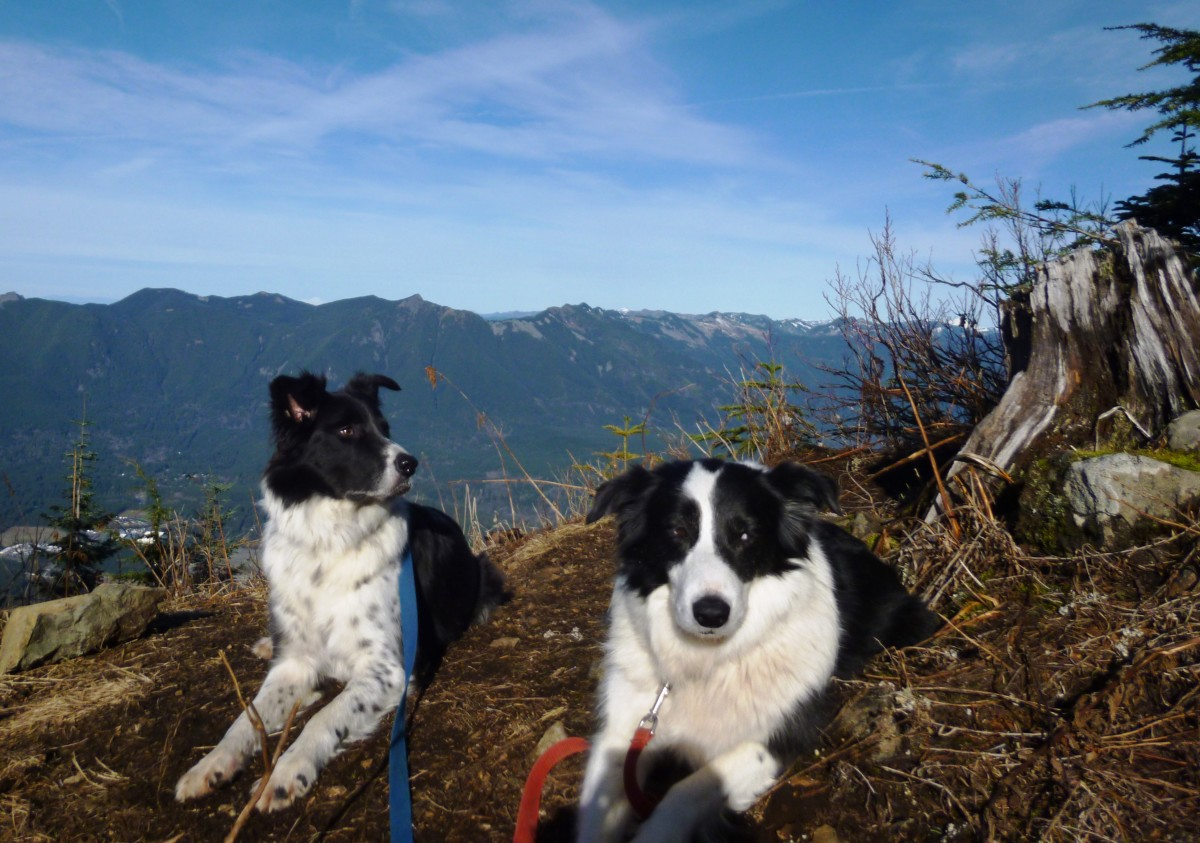 Border Collies on Top of Mount Washington
