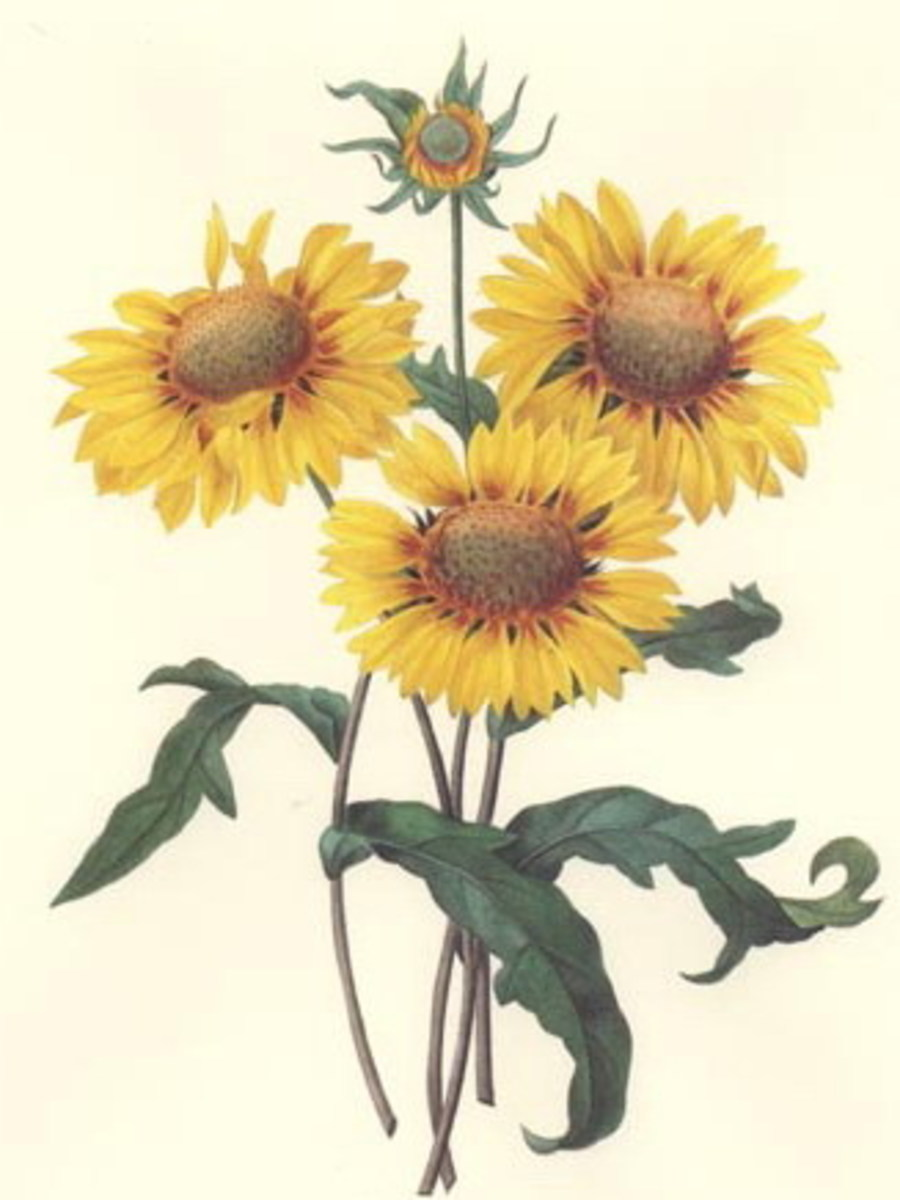 These sunflowers could set the tone for a lovely bridal shower theme