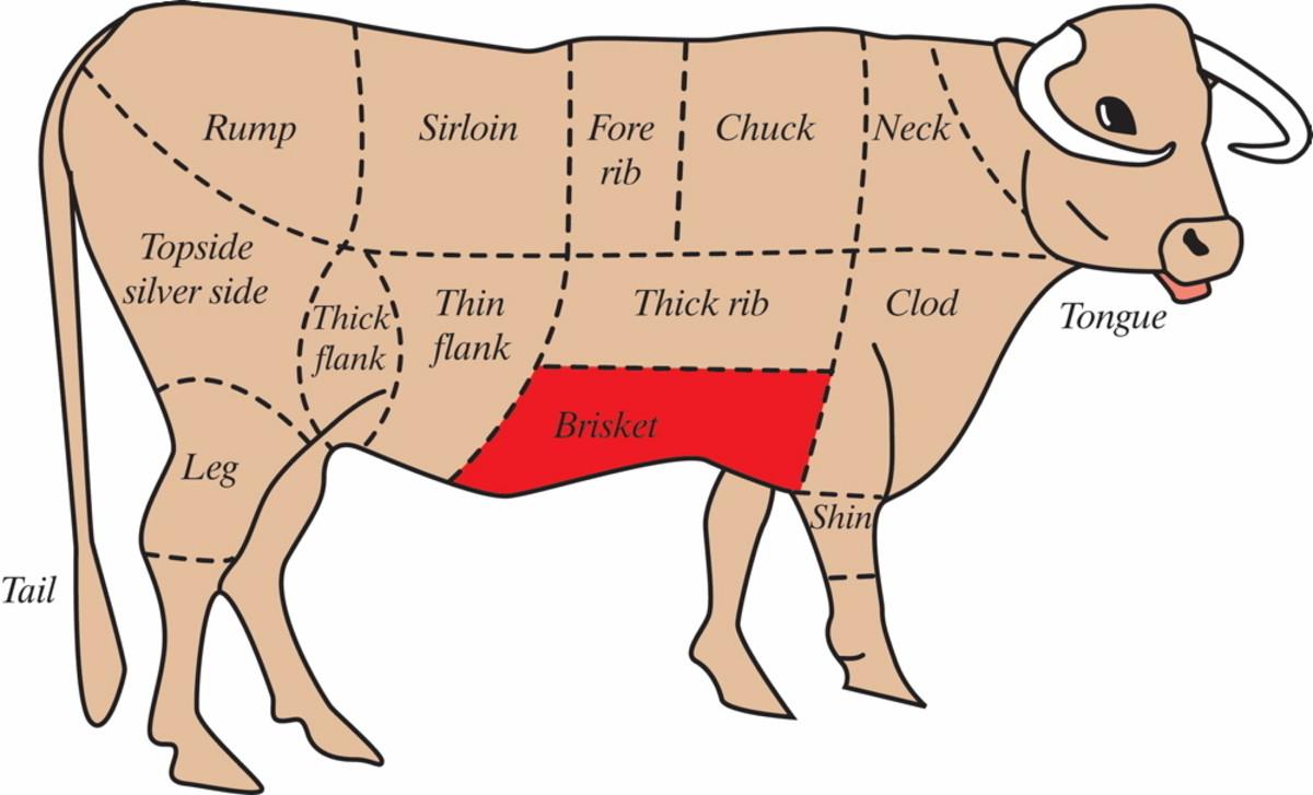 A cow's body described