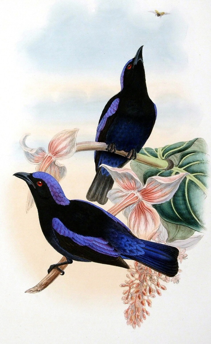 Double-click to see the image full size