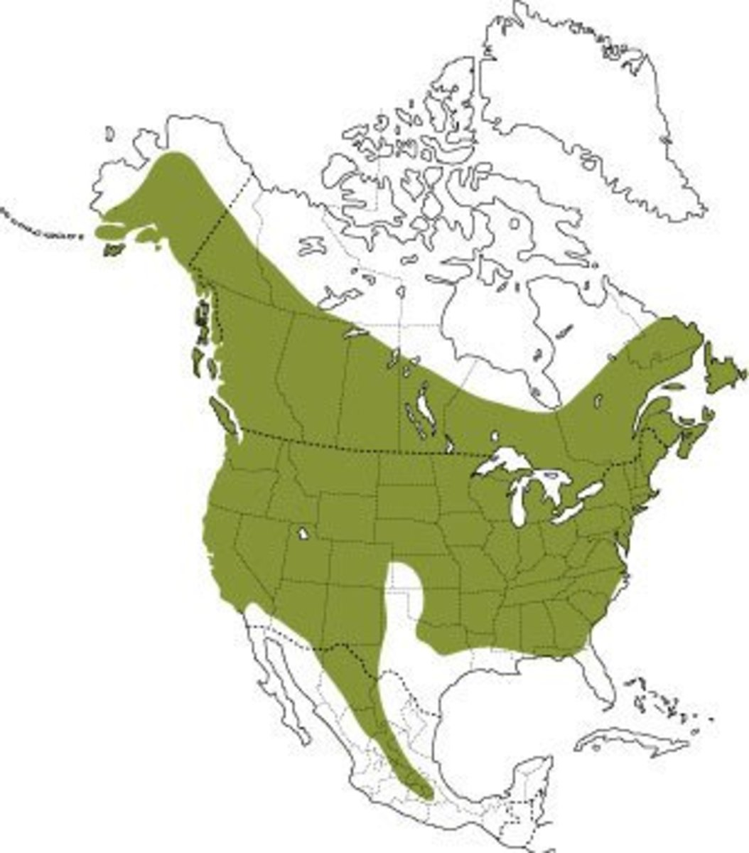 Where Bats Occur In North America