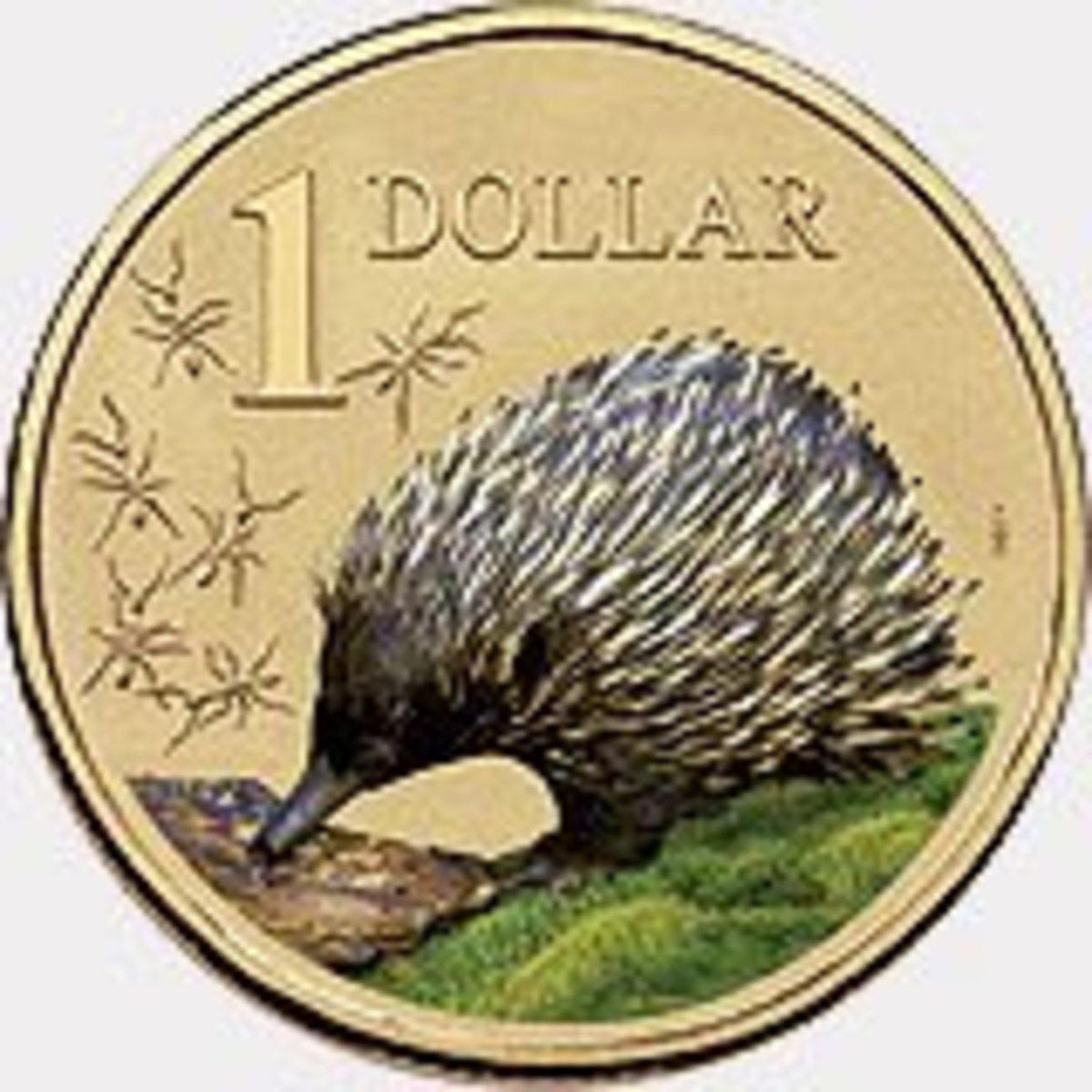 The Echidna on a $1 coin