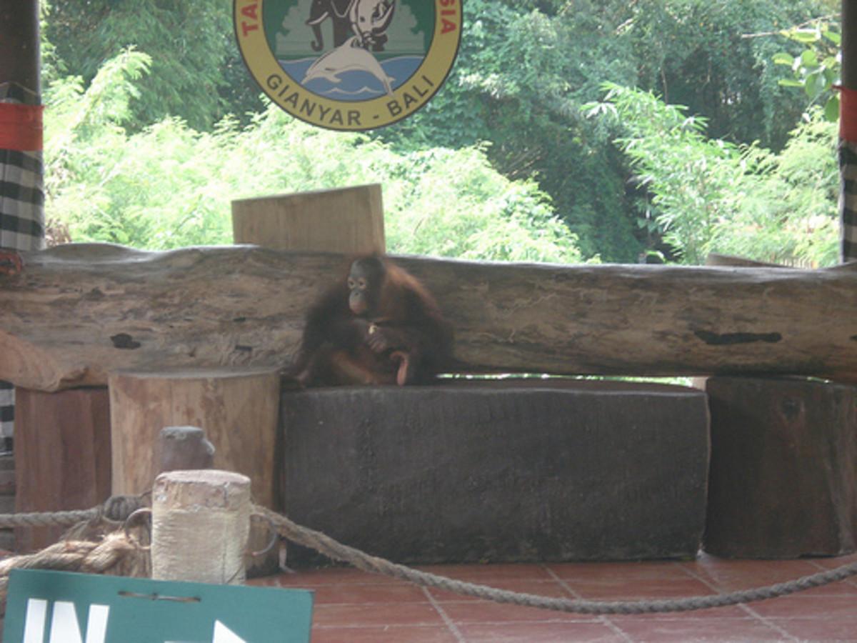an-honest-report-on-bali-safari-and-marine-park