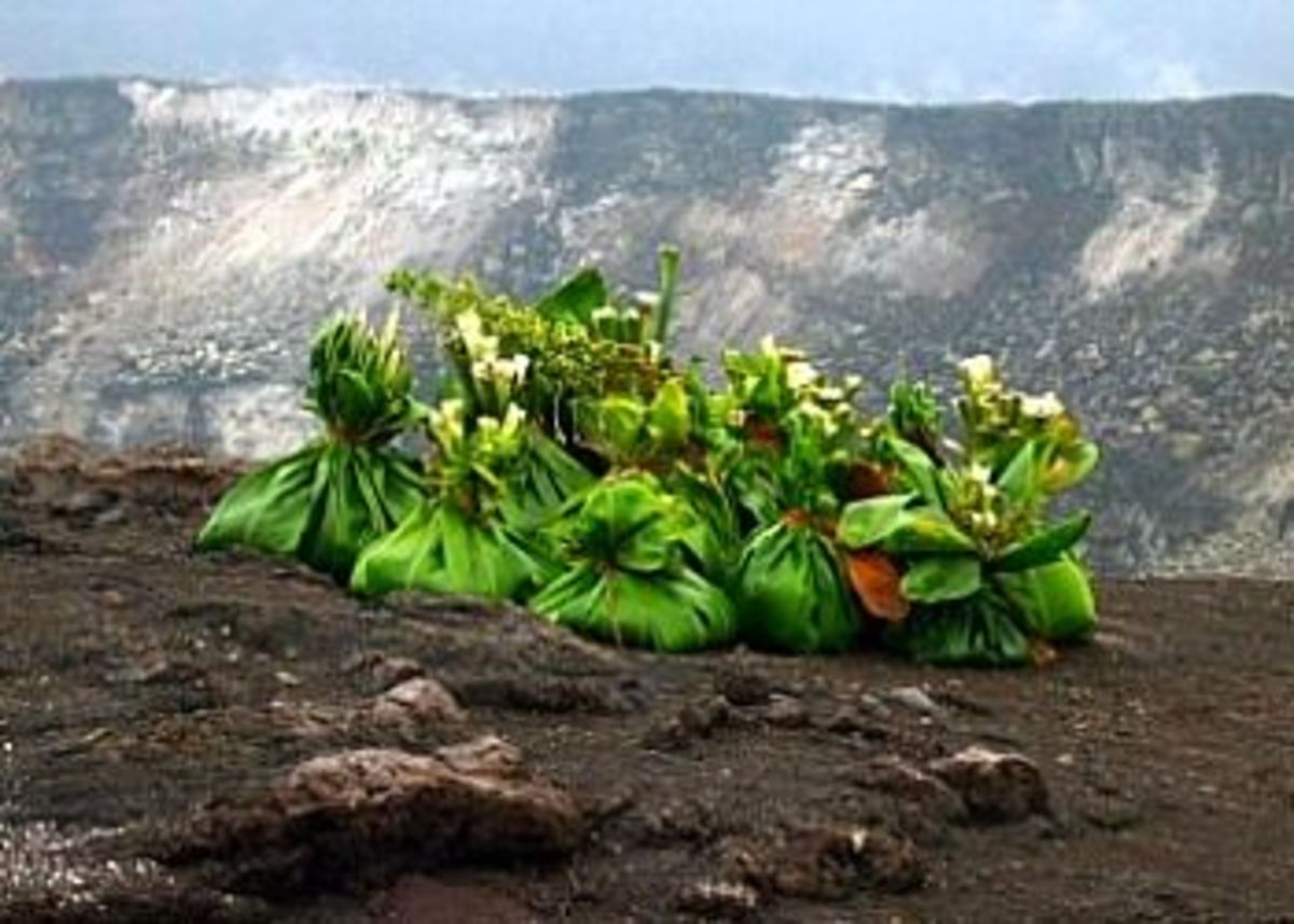 Ho'okupu (gifts or offerings) to Pele at Halema'uma'u Crater