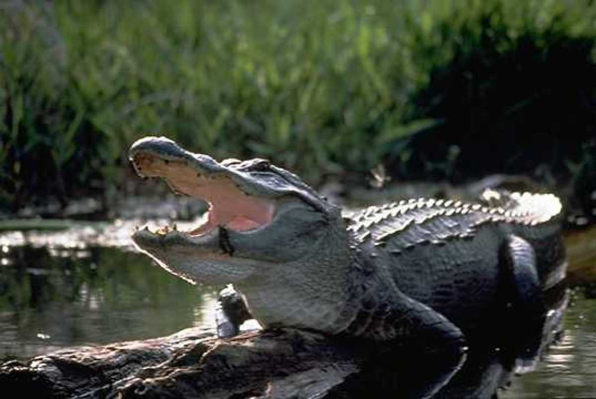 Laughing happy reptiles.