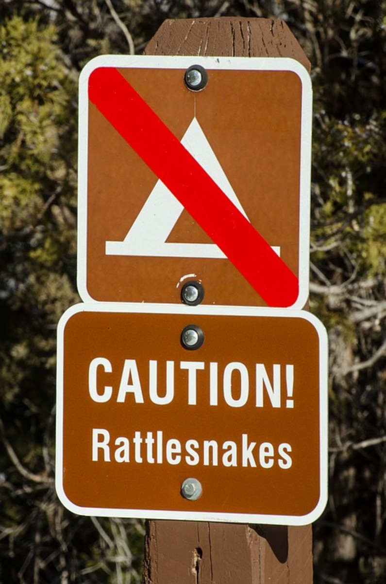 Actually, the rattler is good tasting if prepared correctly and its venom is collected for anti-snake bite serum.