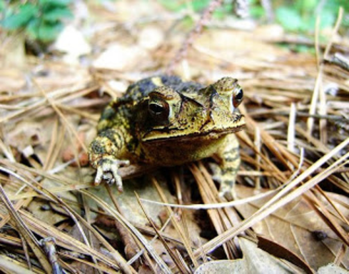 Do you leave leaf litter as a shelter for frogs in the winter?