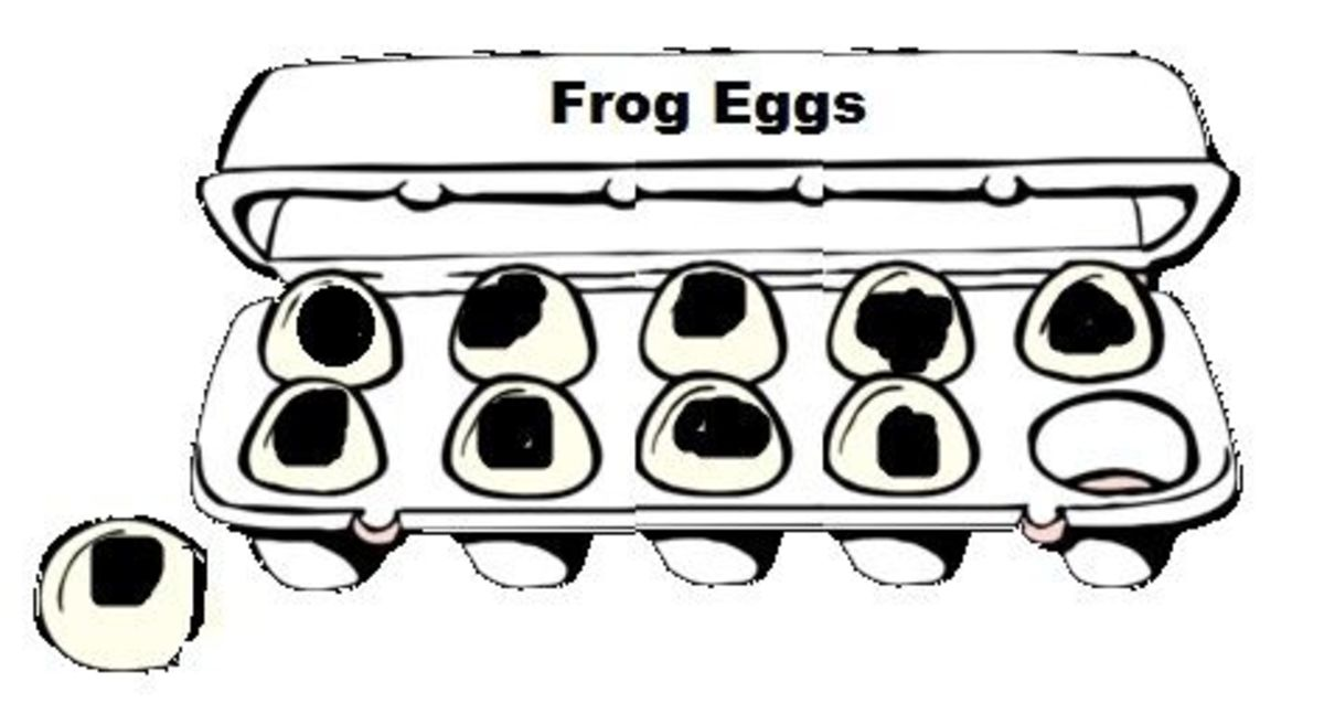 A Carton of Frog Eggs
