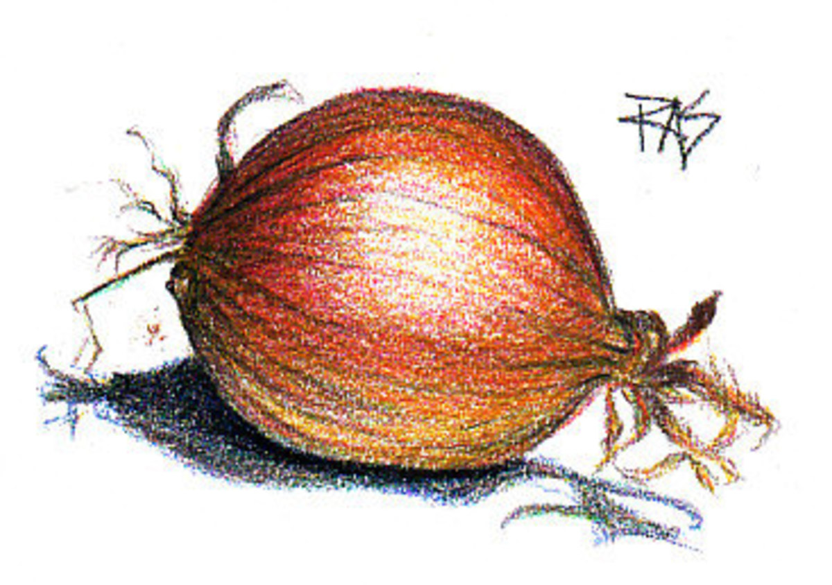 The finished Onion drawing, using Black, a little more Dark Brown and repeats of Red and Yellow layers. Robert A. Sloan, May 21, 2009.