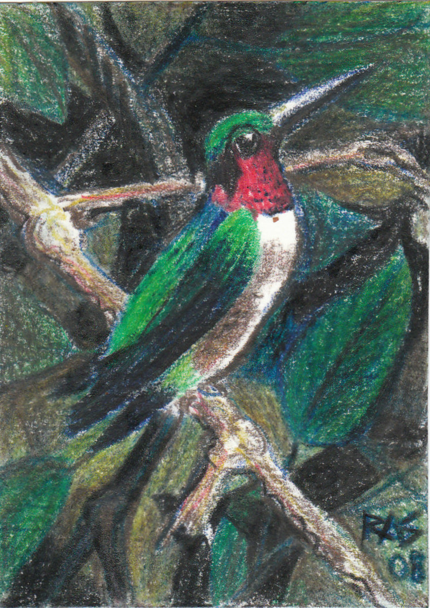 Hummingbird ACEO in six colors of Derwent Coloursoft by Robert A. Sloan