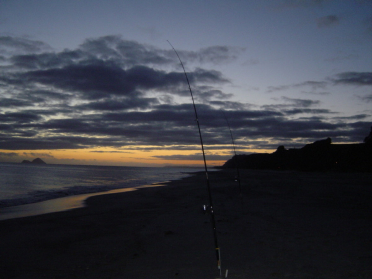 The very best time for fishing is before dawn. This is also the best time for using a carrot bait!