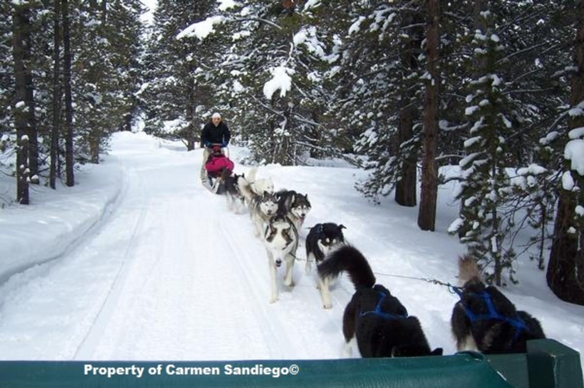 Dog sledding at Good Times