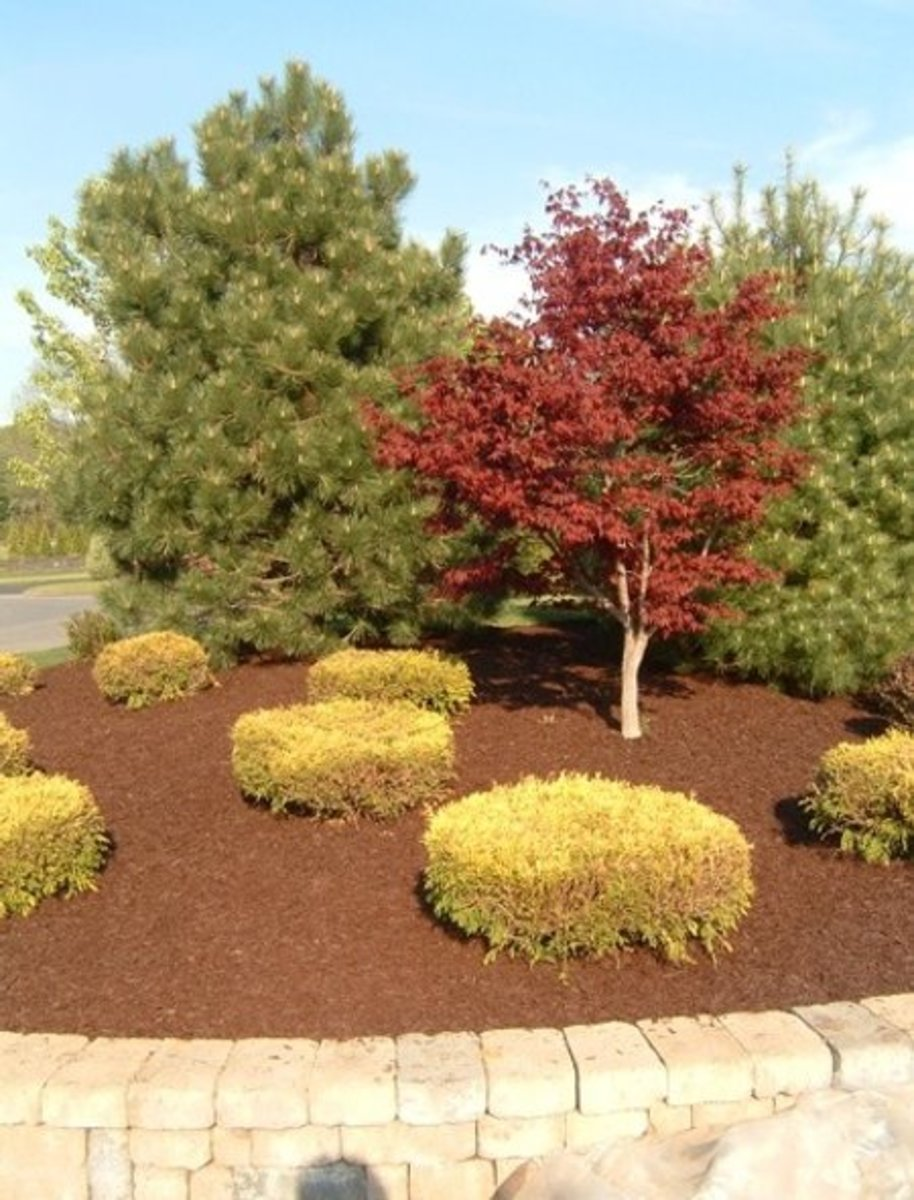See What Beautiful Mulch Can Do For You?