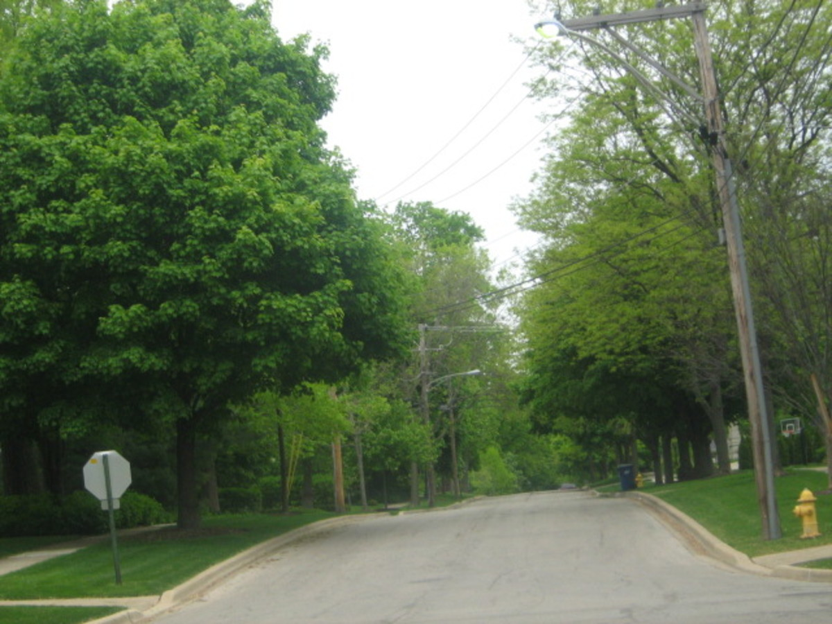 Most residential streets in Hinsdale are tree-lined