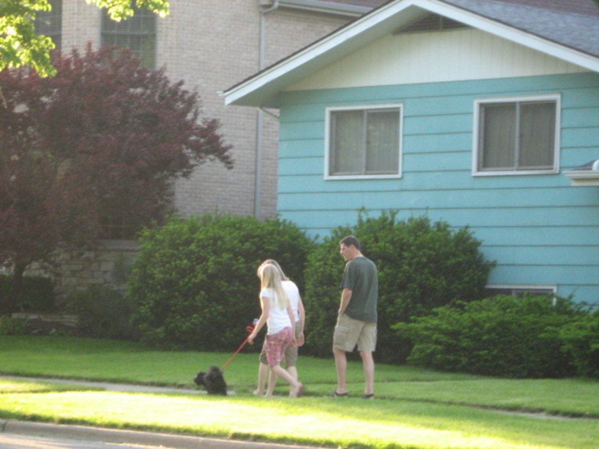 Dog walking is a common sight in Hinsdale