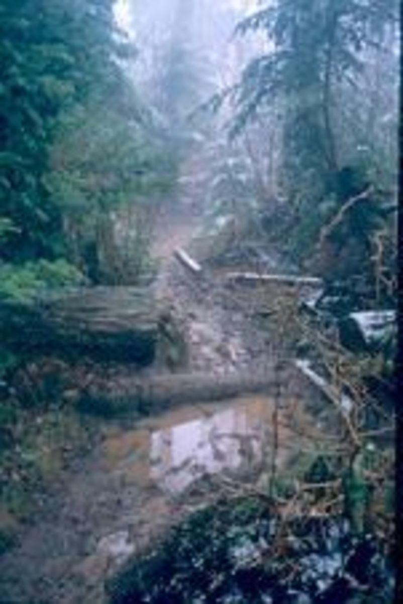 A very muddy Appalachian Trail in the Smokey Mountains