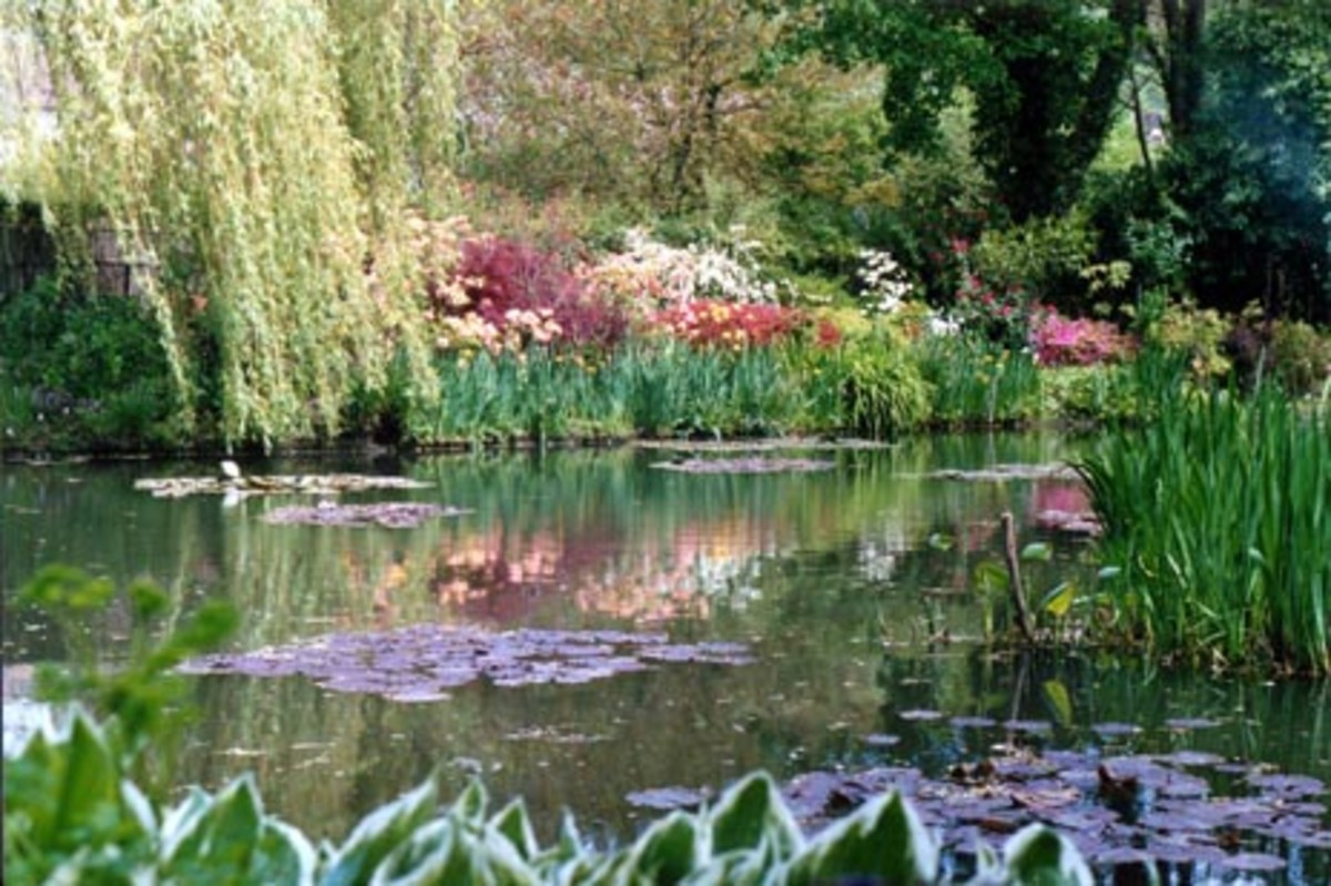 the water lily pool