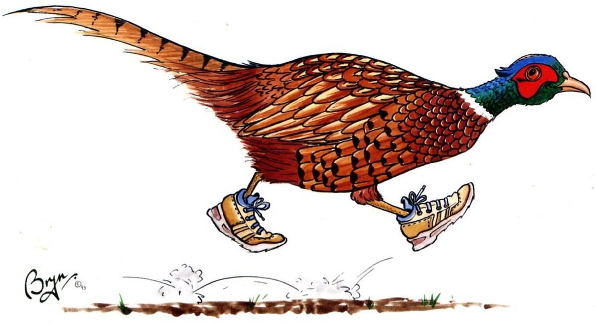 The escapee Pheasant! (courtesy of Bryn Parry Studios)