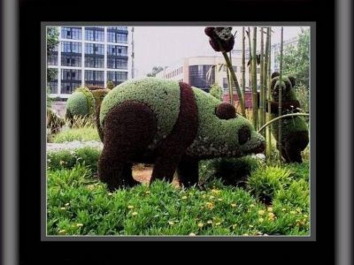 Giant Panda Topiary