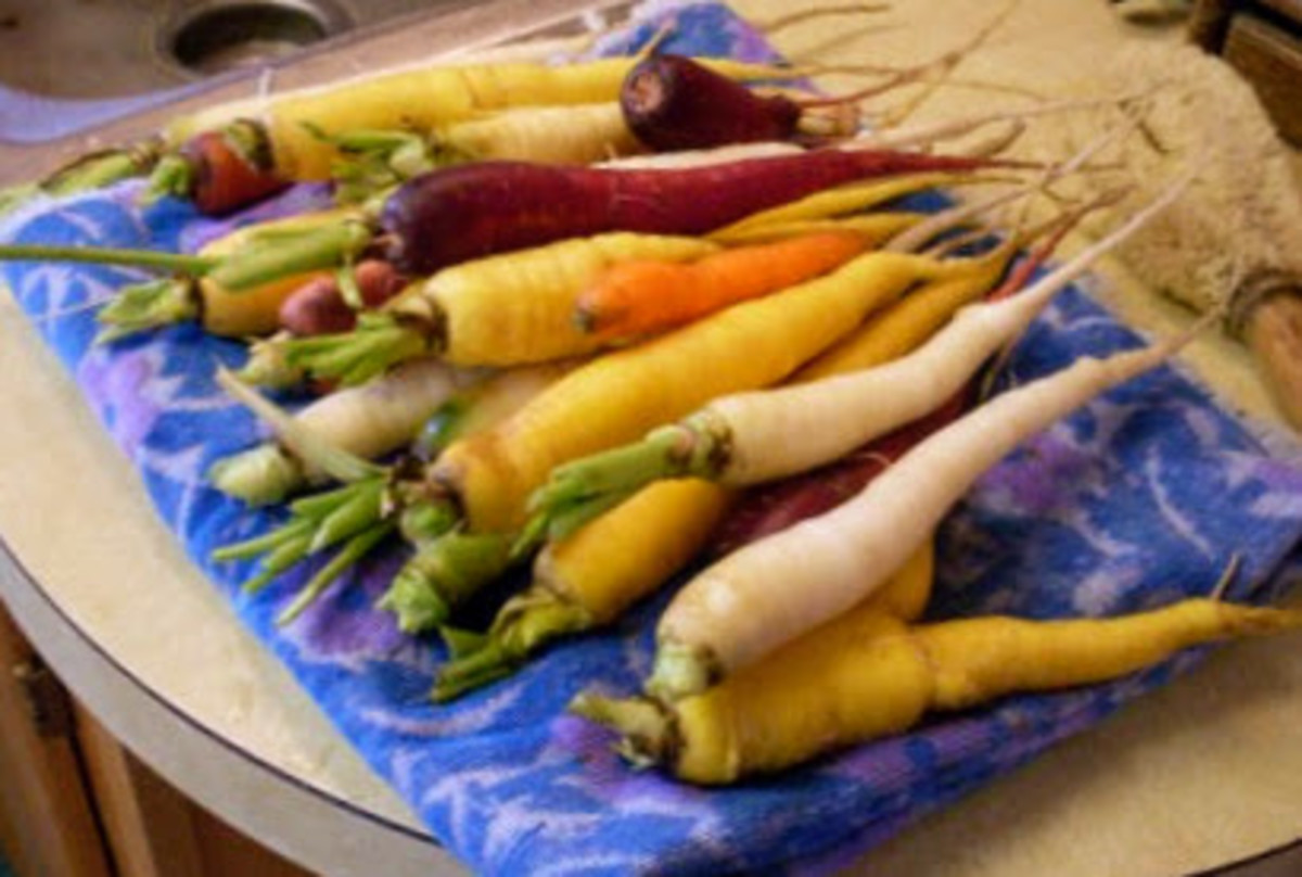 Begin with carefully selected, well-scrubbed carrots, having no major insect damage, rot, or other problems.