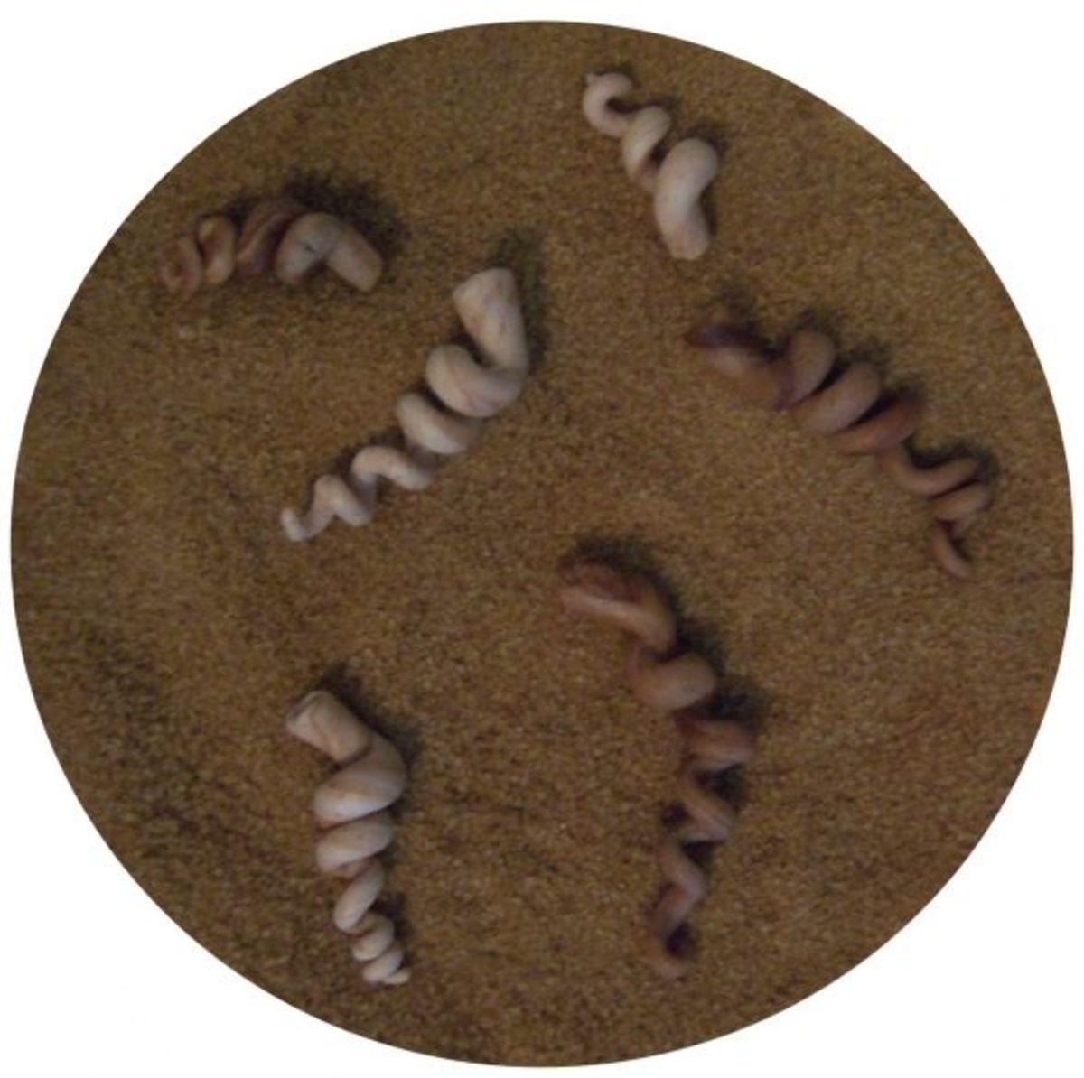fondant_seashells