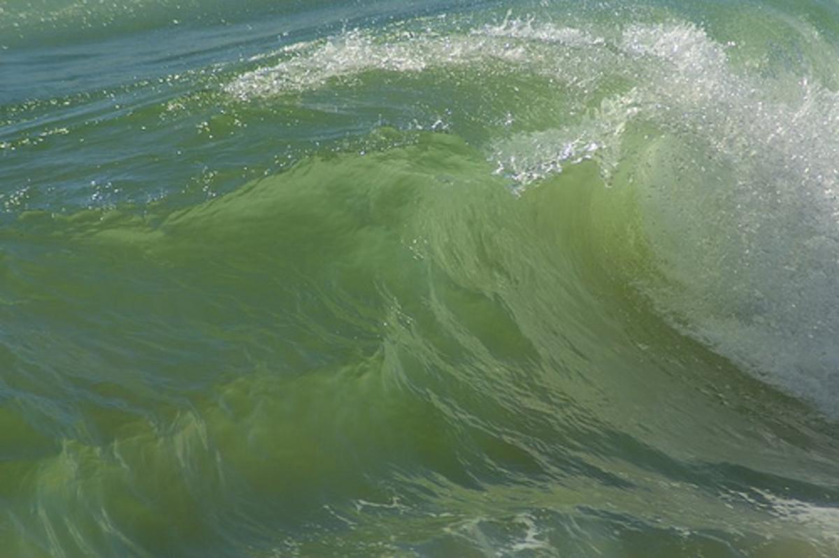 Ocean Wave photo by jimsnedd on flickr.com