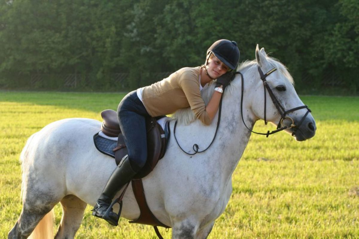 exploring-the-best-brands-in-equestrian-riding-apparel