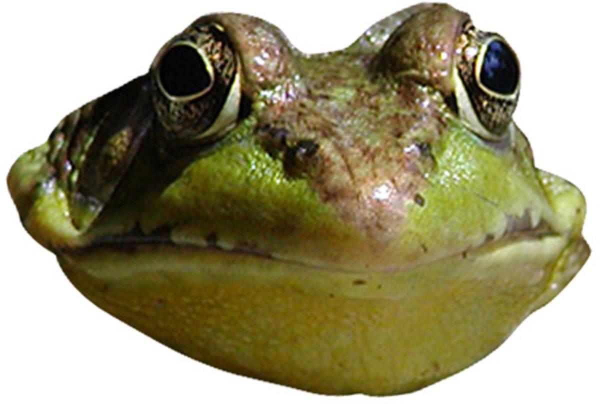 reptiles-amphibians-coloring-printables