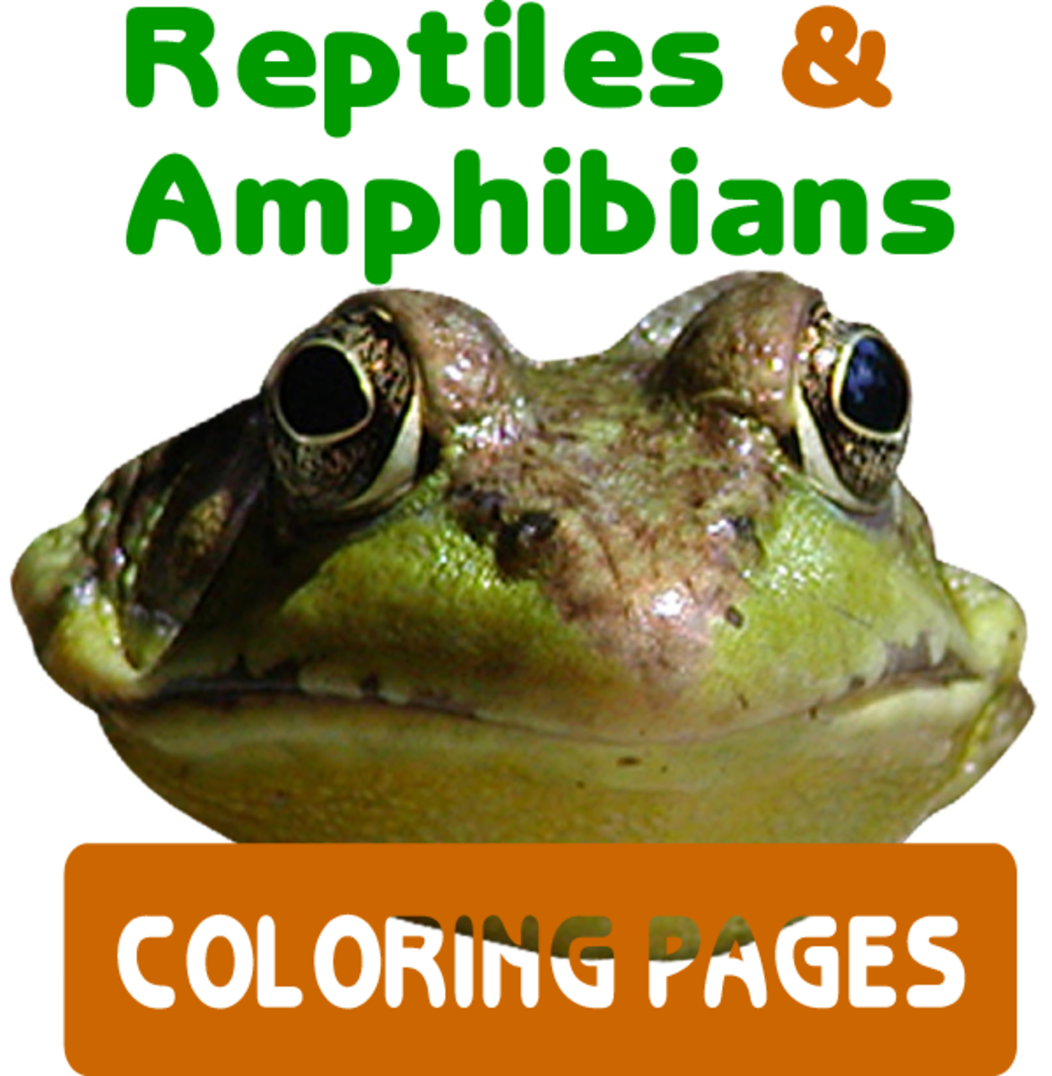 Reptiles & Amphibians Coloring Pages